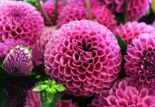 melissa flower দীনী শিক্ষা গুরুত্ব