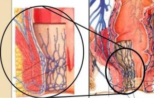 দুটো ভিন্ন রক্ত পরিবহন সিস্টেমের মিলনস্থল (Porto-systemic anastomosis)